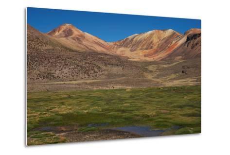 Wetland in the Atacama-JeremyRichards-Metal Print