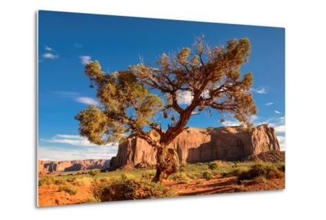 Lonely Tree Still a Life in Monument Valley, Utah-lucky-photographer-Metal Print