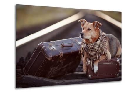 Dog on Rails with Suitcases.-AZALIA-Metal Print