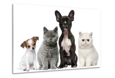 Group of Dogs and Cats in Front of White Background-Life on White-Metal Print