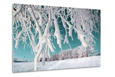 Tree in Snow on Celestial Background-basel101658-Metal Print