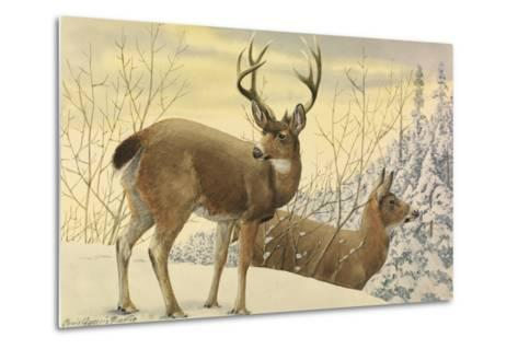 A Painting of Two Black-Tailed Deer Standing in the Snow-Louis Agassi Fuertes-Metal Print