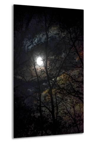 The Full Moon Creates Rainbows in the Clouds, Seen Through Silhouetted Tree Branches-Amy White and Al Petteway-Metal Print