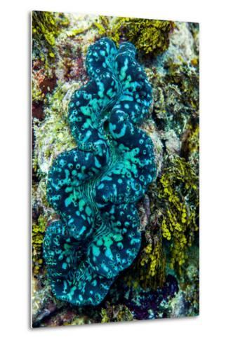 The Iridescent Neon Blue Lips of a Giant Clam on a Tropical Coral Reef-Jason Edwards-Metal Print
