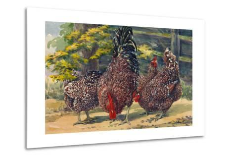 England's Speckled Sussex Pecks the Ground-Hashime Murayama-Metal Print