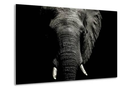 The Wrinkled Trunk and Face of an African Elephant-Jason Edwards-Metal Print