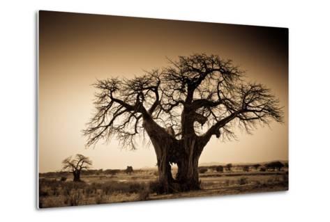 An Elephant-Made Hole in a Large Baobab Tree, Ruaha National Park, Tanzania-Robin Moore-Metal Print