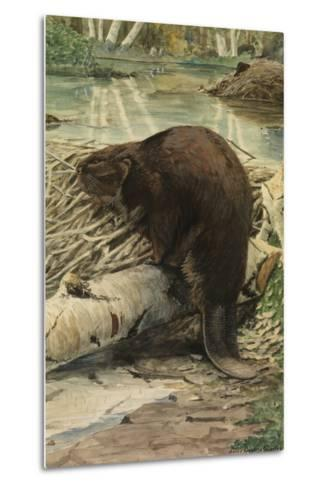 A Painting of an American Beaver Sitting on a Freshly Gnawed Log-Louis Agassi Fuertes-Metal Print