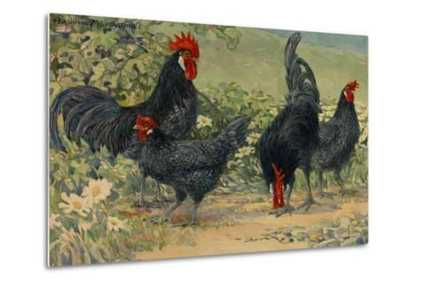 Four Blue Andalusian Chickens, or Historically Blue Minorca Chickens-Hashime Murayama-Metal Print
