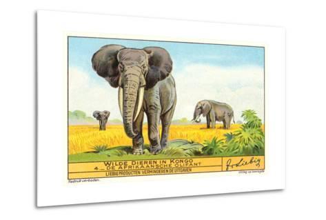 Elephants in the Congo--Metal Print