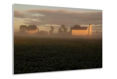 Sunrise Casts a Golden Tint on a Farm and Misty Cornfield-Stephen St^ John-Metal Print