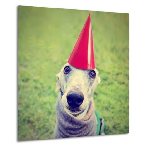 A Cute Dog in a Local Park with a Birthday Hat-graphicphoto-Metal Print
