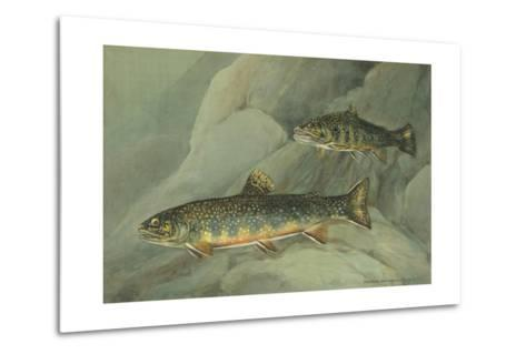 A Painting of a Pair of Brook Trout Swimming over Rocks-Hashime Murayama-Metal Print
