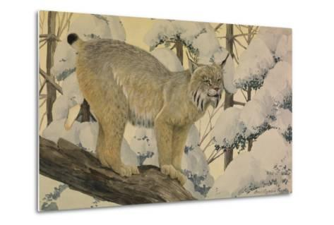A Painting of a Canada Lynx Standing on Fallen Tree Trunk-Louis Agassi Fuertes-Metal Print
