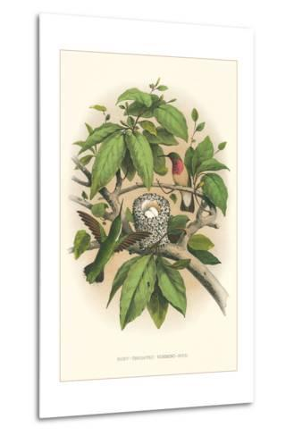 Ruby-Throated Hummingbird Nest and Eggs--Metal Print