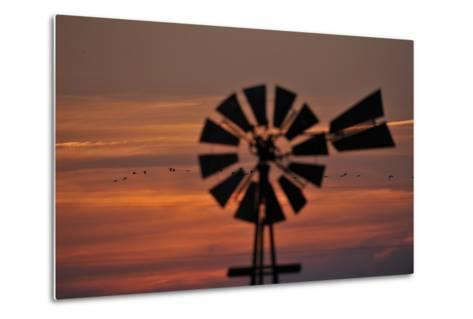 A Silhouetted Windmill and a Flock of Migrating Sandhill Cranes at Sunset-Michael Forsberg-Metal Print