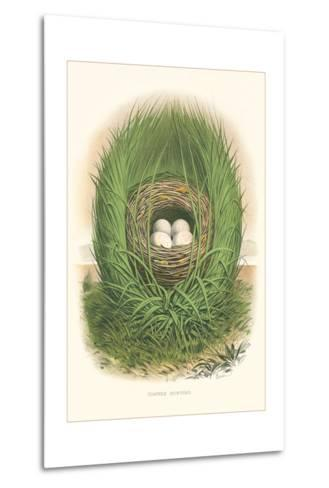 Towhee Bunting Nest and Eggs--Metal Print