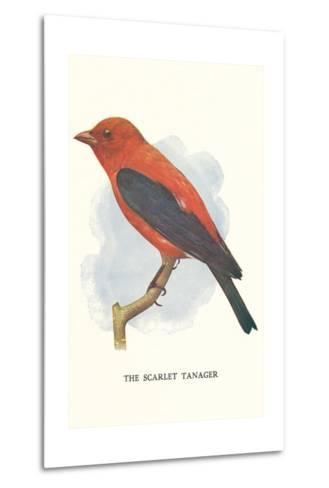 Scarlet Tanager--Metal Print