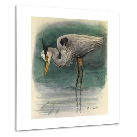 A Painting of a Great Glue Heron Hunting for Fish in Shallow Water-Louis Agassi Fuertes-Metal Print
