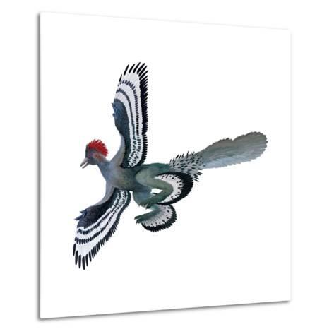 Color Depictions in an Anchiornis Feathered Dinosaur-Xing Lida-Metal Print