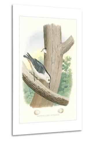 White-Bellied Nuthatch Nest and Eggs--Metal Print