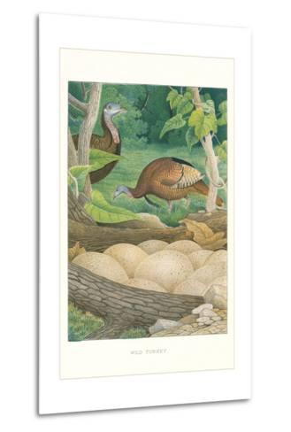 Wild Turkey Nest and Eggs--Metal Print