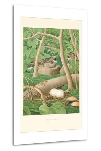 Whippoorwill Nest and Eggs--Metal Print