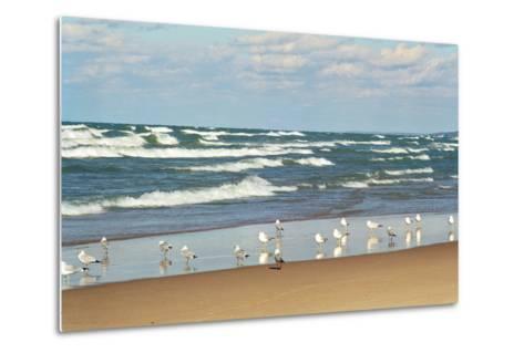 Flock of seaguls on the beaches of Lake Michigan, Indiana Dunes, Indiana, USA-Anna Miller-Metal Print