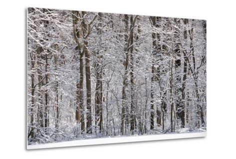 Winter in Eagle Creek Park, Indianapolis, Indiana, USA-Anna Miller-Metal Print