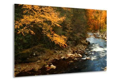 Golden foliage reflected in mountain creek, Smoky Mountain National Park, Tennessee, USA-Anna Miller-Metal Print