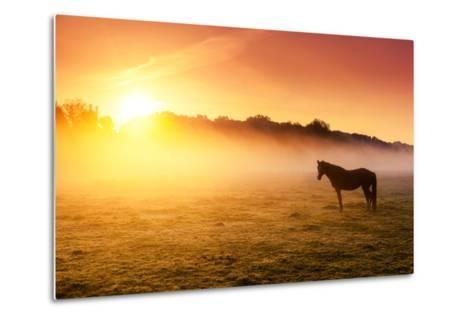Arabian Horses Grazing on Pasture at Sundown in Orange Sunny Beams. Dramatic Foggy Scene. Carpathia-Leonid Tit-Metal Print