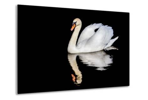 Swan with Reflection-Alan Tunnicliffe-Metal Print
