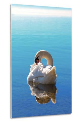 Sleeping Swan in Blue Water-SusaZoom-Metal Print