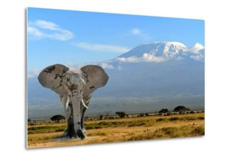 Elephant-byrdyak-Metal Print