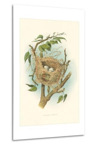 Orchard Oriole Nest and Eggs--Metal Print