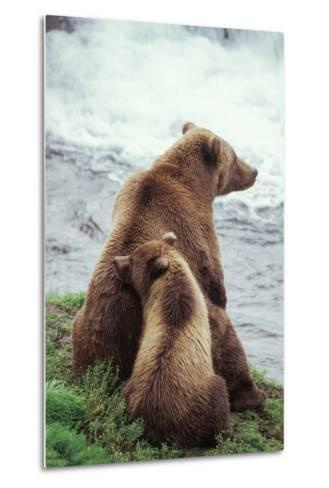 A Grizzly Bear Cub Nuzzles its Mother by a Waterfall-Tom Murphy-Metal Print