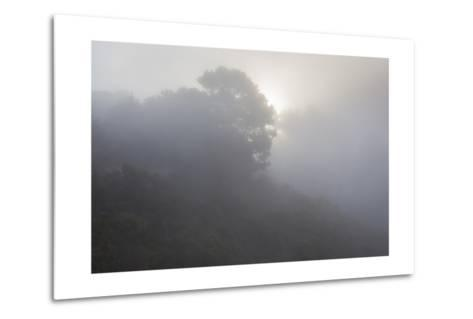 Sunrise Through Fog-Henri Silberman-Metal Print
