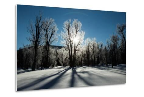 Sunlight Through Ice-Covered Trees in a Snowy Landscape. a Halo over the Sun-Robbie George-Metal Print