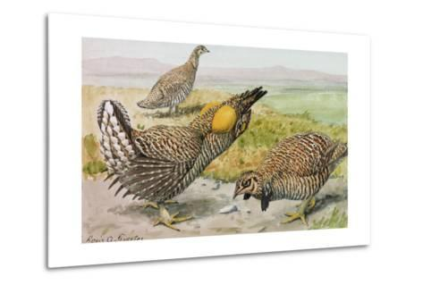 A Painting of a Male and Female Prairie Chicken with a Heath Hen-Louis Agassi Fuertes-Metal Print