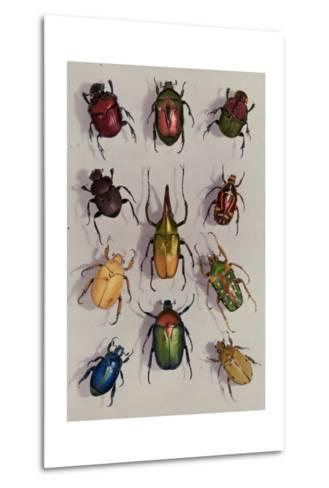 A Group of Scarabs from the Scarabaeid Family-Edwin L^ Wisherd-Metal Print