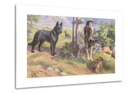Groenendael and Malinois Dogs Work as Herders and Couriers-Edward Herbert Miner-Metal Print