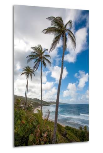 The Palm Lined and Rocky Beach at Bathsheba-Matt Propert-Metal Print