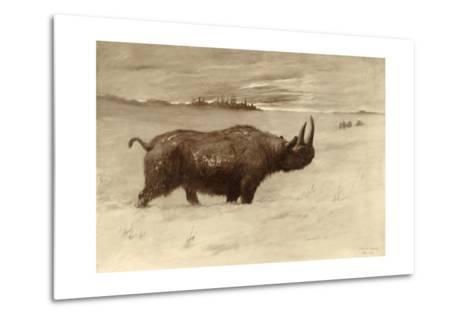 A Painting of a Woolly Rhinoceros Tichorhinus of the Pleistocene Age-Charles R. Knight-Metal Print