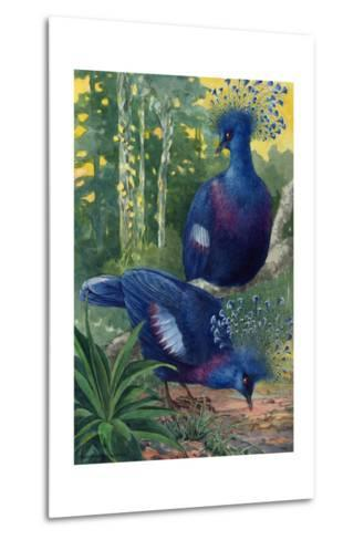 A View of the Flimsy Crests of Two Victoria Crowned Pigeons-Hashime Murayama-Metal Print