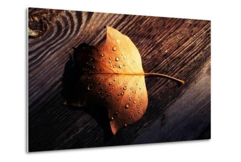 Autumn Arrives-Philippe Sainte-Laudy-Metal Print