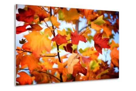 Autumn Paintography-Philippe Sainte-Laudy-Metal Print