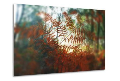 Autumn Light-Viviane Fedieu Daniel-Metal Print