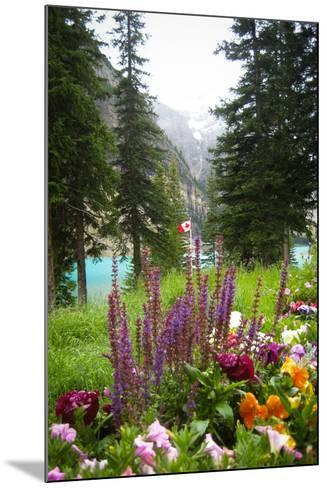 Banff Flowers In National Park Nature Photo Poster--Mounted Poster