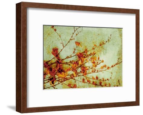 Persimmon-Andrew Michaels-Framed Art Print