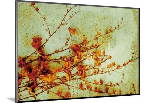 Persimmon-Andrew Michaels-Mounted Art Print